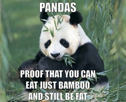 funny-picture-diet-panda-fat