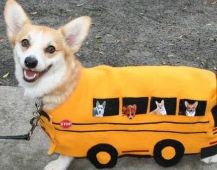 funny-picture-dog-bus-outfit