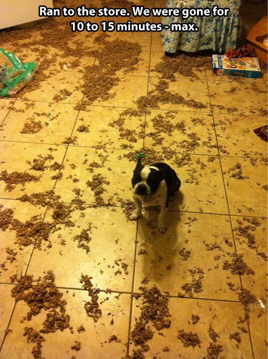 funny-picture-dog-carefresh-floor-mess