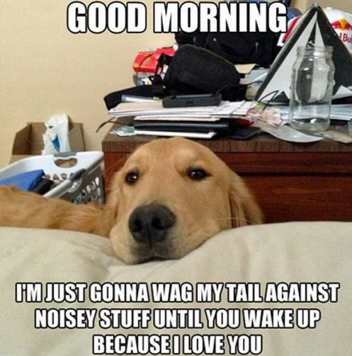 funny-picture-dog-good-morning