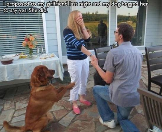 funny-picture-dog-proposal
