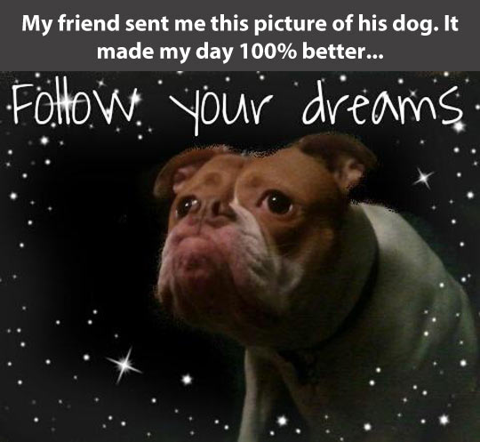 funny-picture-dog-stars-space-inspirational