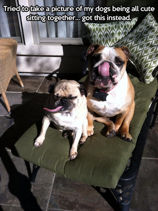 funny-picture-dog-tongue-large-picture