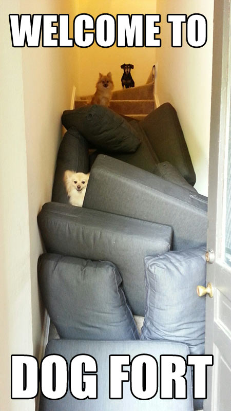 funny-picture-dogs-fort-cushions-stairs