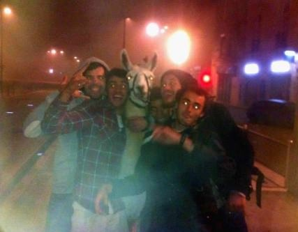 Have ever been so drunk that you decided to steal a lama