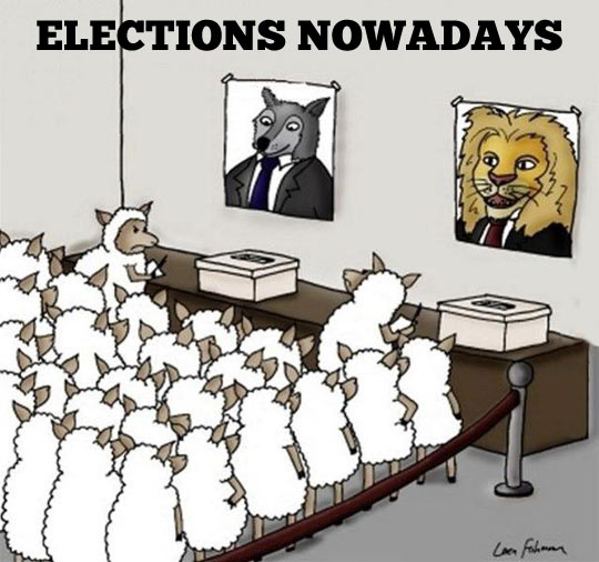 funny-picture-elections-animals-sheep-fox-lion
