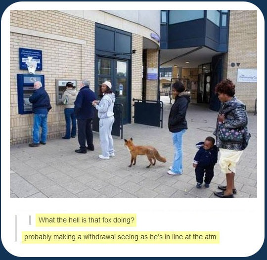 funny-picture-fox-atm-line