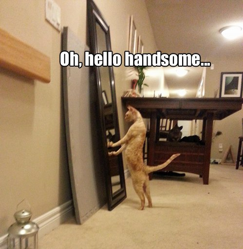 funny-picture-handsome-cat