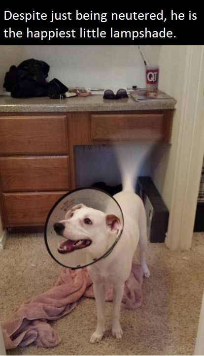 funny-picture-happy-dog-lampshade