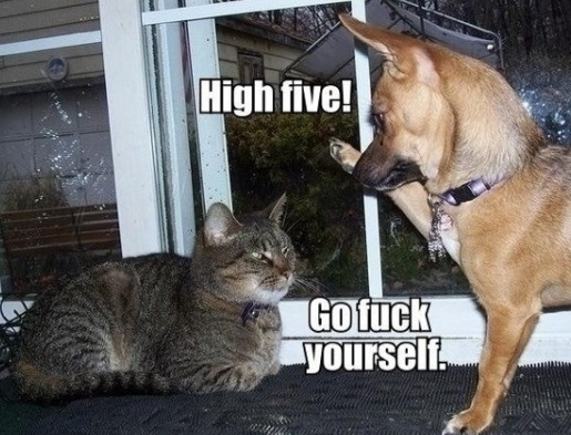 funny-picture-high-five-cat-dog