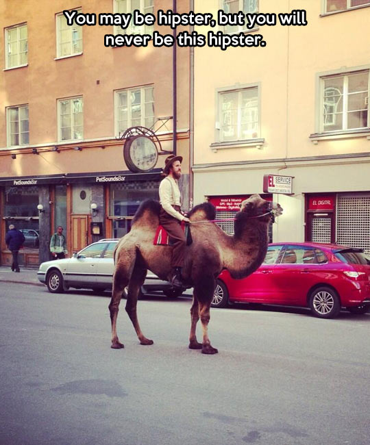 funny-picture-hipster-camel-street-man