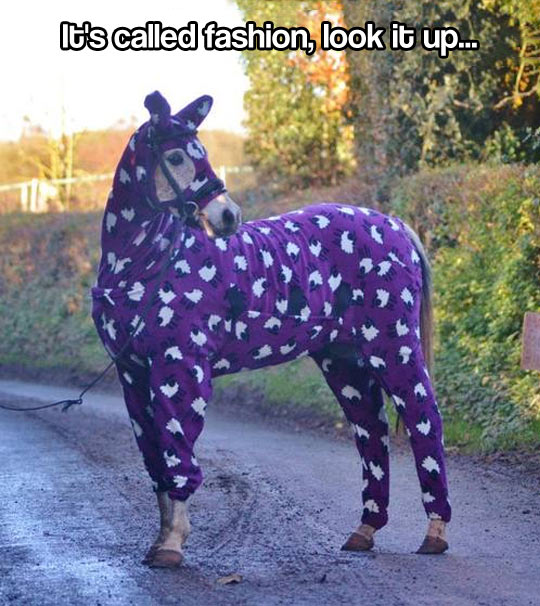 funny-picture-horse-costume-purple-fashion