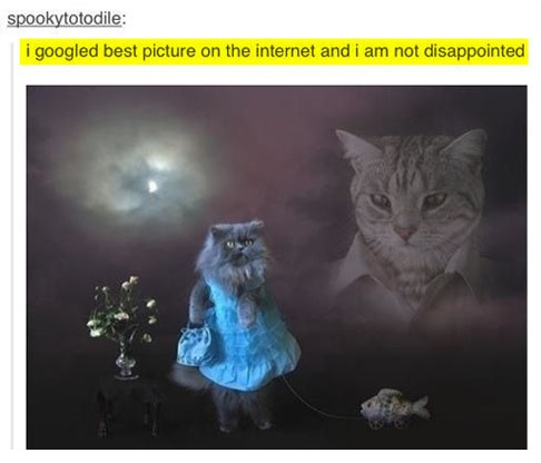 funny-picture-internet-cat-best-picture-Google