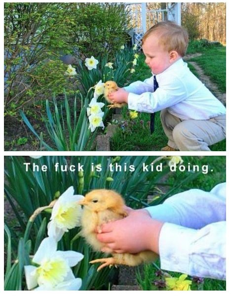 funny-picture-kid-duck-wtf