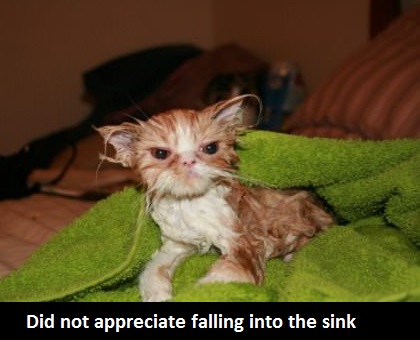funny-picture-kitty-falling-sink