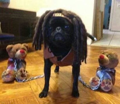 funny-picture-michonne-dog-walking-dead