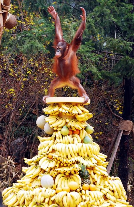 funny-picture-monkey-happiness-bananas