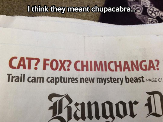 funny-picture-newspaper-animals-mystery-beast