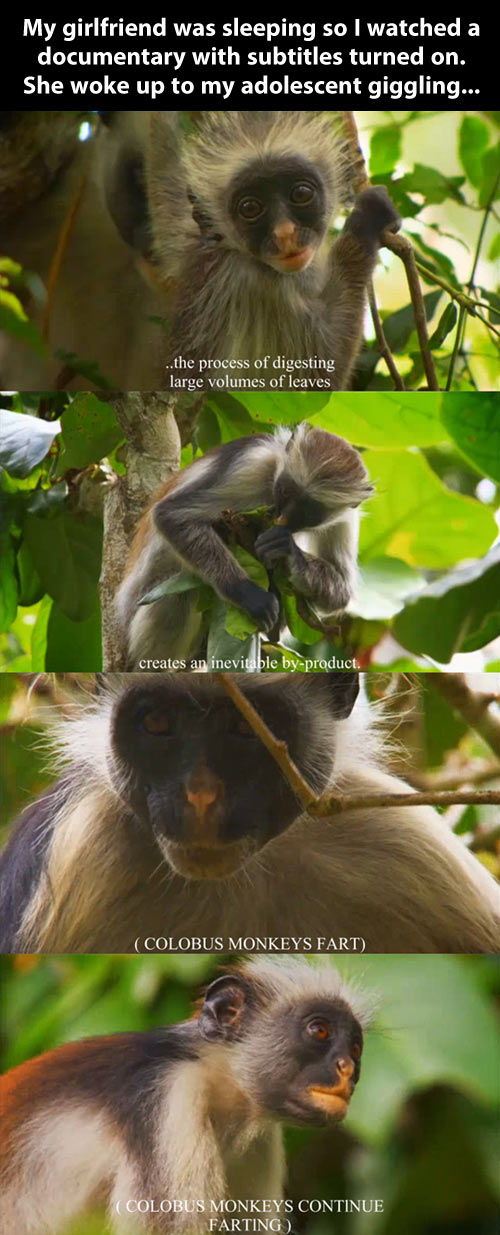 funny-picture-show-subtitle-monkey-farting-jungle