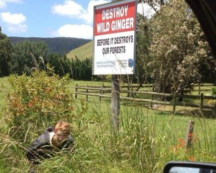 funny-picture-sign-wild-ginger
