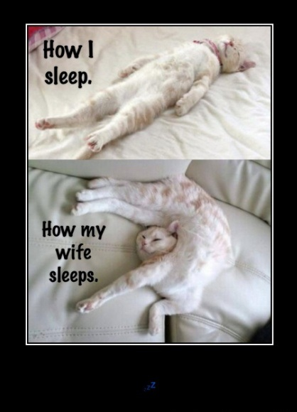 funny-picture-sleep-wife-cats