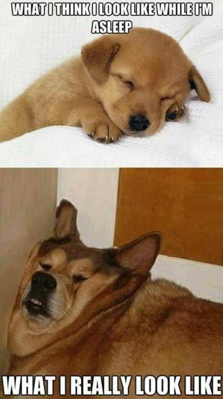 funny-picture-sleeping-expectations-reality-dogs