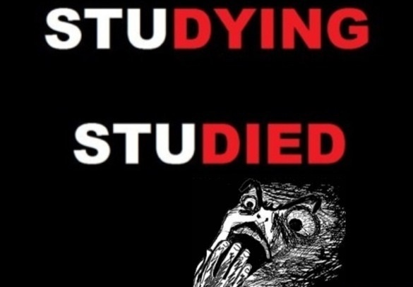 funny-picture-studying-studied