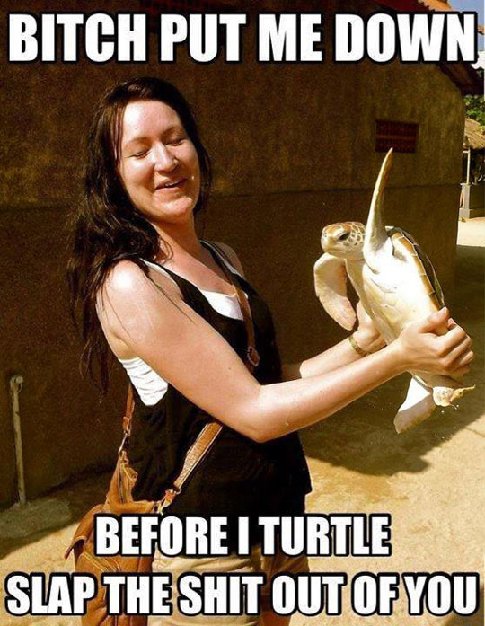 funny-picture-turtle-angry-slap-girl