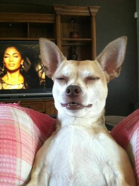 funny-picture-tv-dog