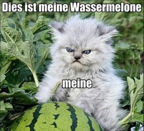 funny-picture-watermelon-cat