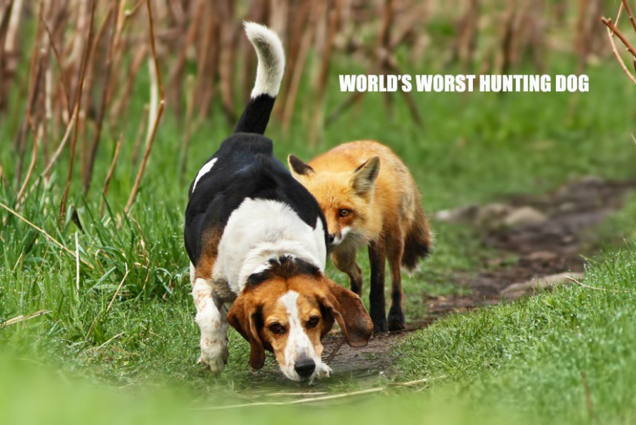 Worst Hunting Dog Delectable Funny Hunting Quotes