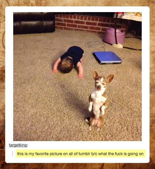 funny-picture-Tumblr-dog-baby-lying