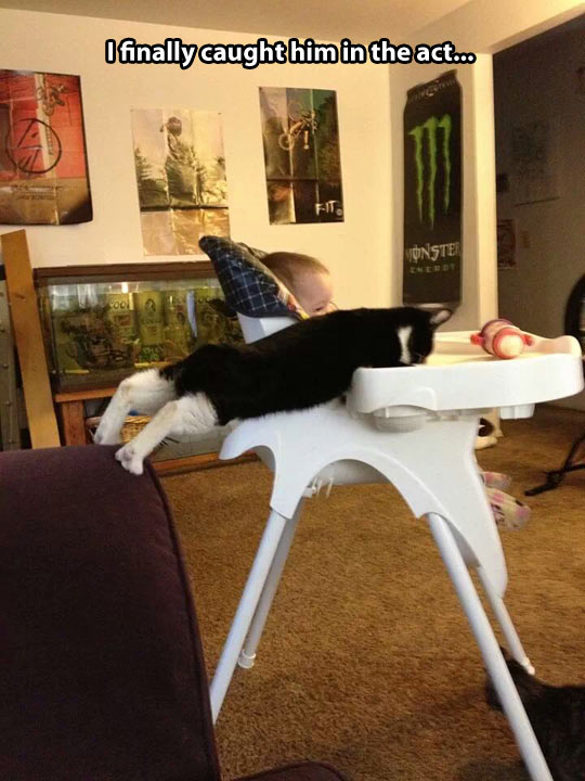 funny-picture-baby-cat-food-house