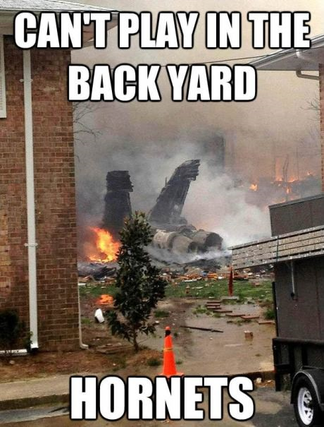 funny-picture-backyard-hornets