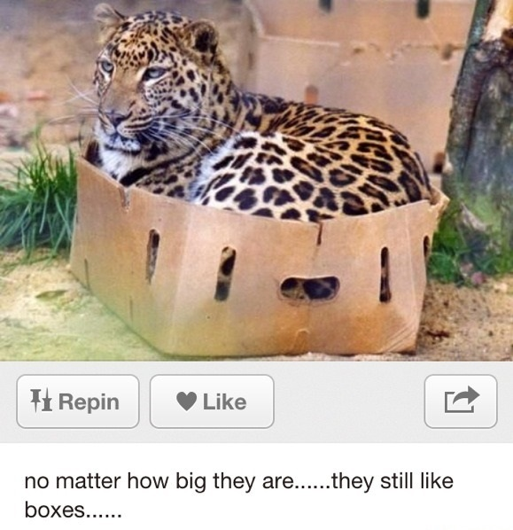 funny-picture-big-cats-boxes