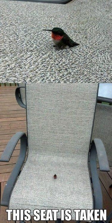 funny-picture-birt-seat-taken