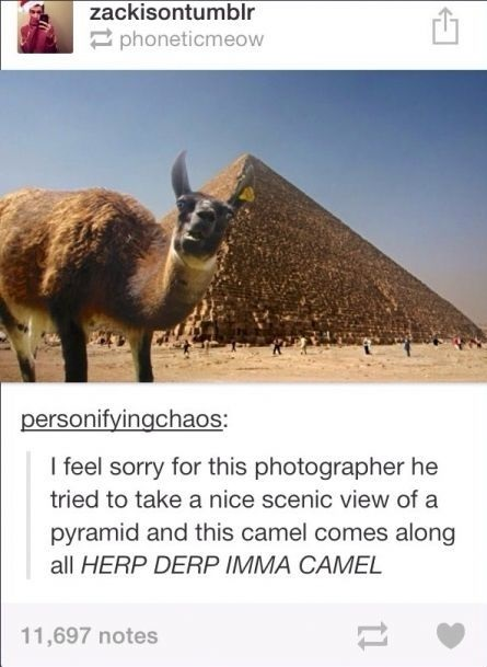 funny-picture-camel-derp-pyramids