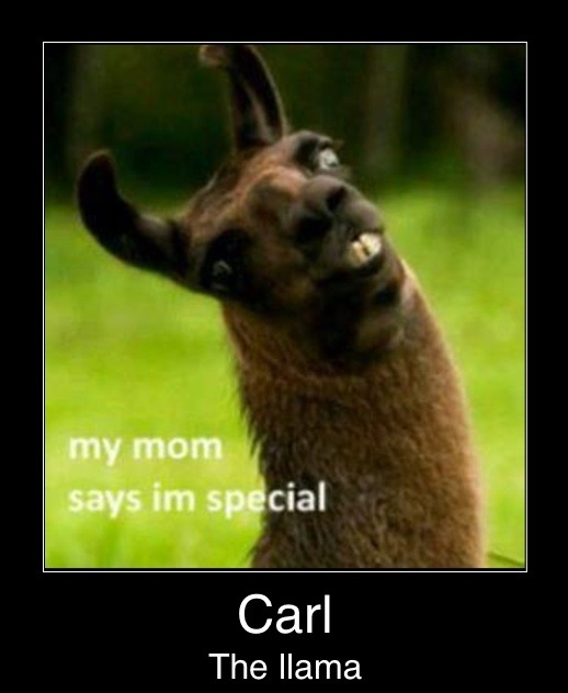 funny-picture-carl-the-llama