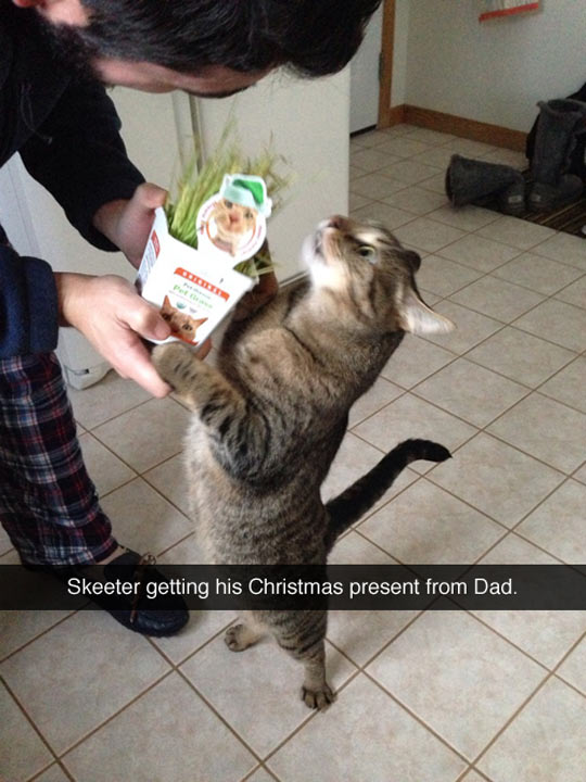 funny-picture-cat-Catnip-Christmas-present