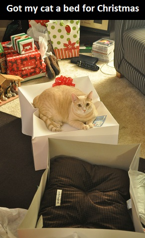 funny-picture-cat-bad-christmas