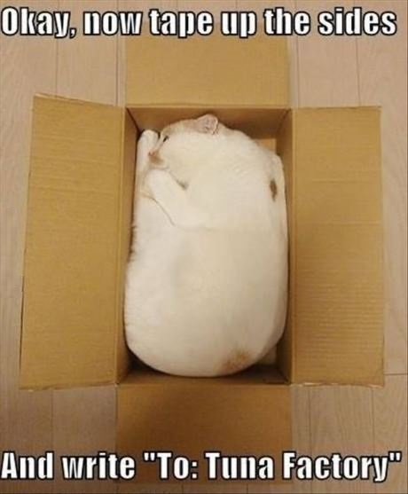funny-picture-cat-box-parcel