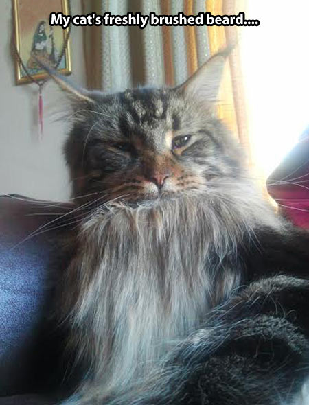 funny-picture-cat-brushed-beard-face