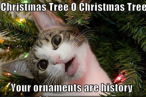 Cats Christmas song