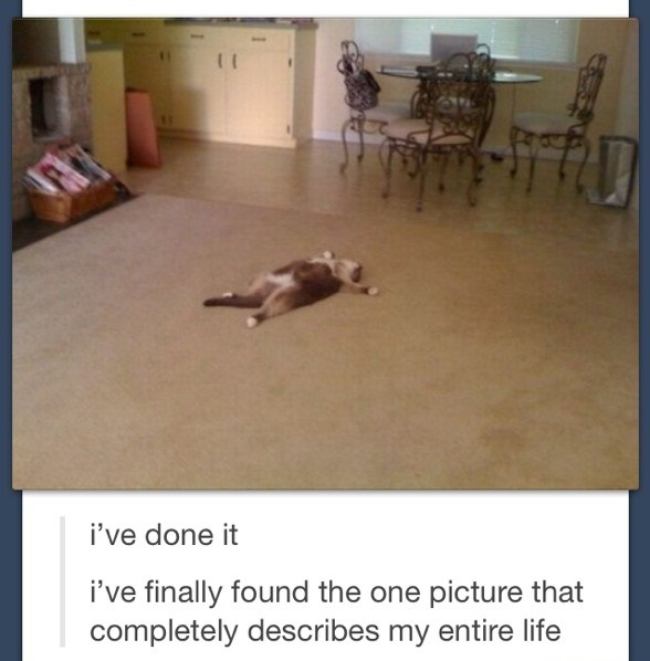 funny-picture-cat-comment-life