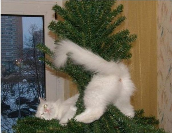 funny-picture-cat-decorate-tree