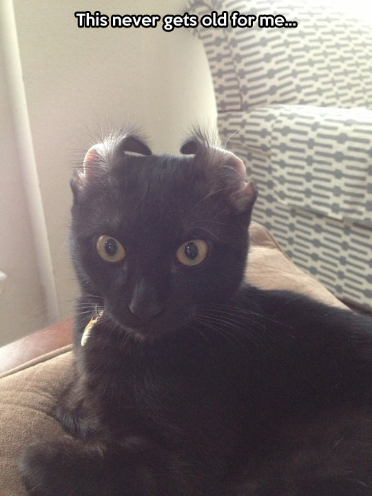 funny-picture-cat-ears-back-face