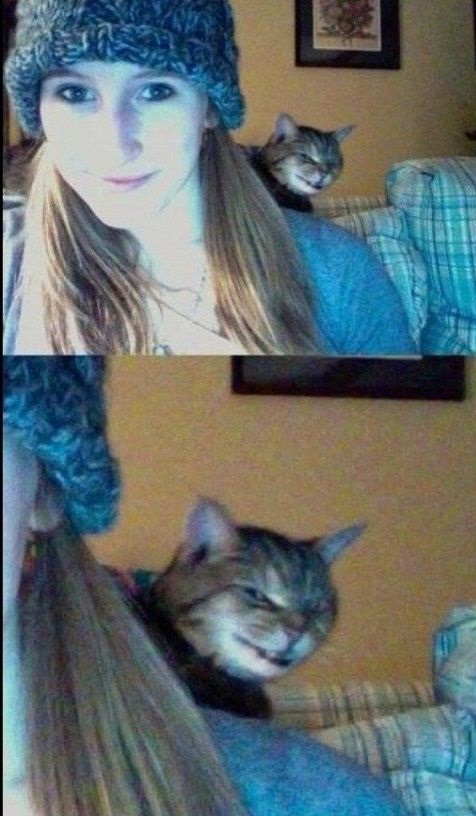 funny-picture-cat-evil-face