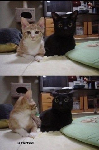 funny-picture-cat-farted