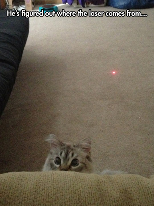 funny-picture-cat-kitty-laser-eyes-red-dot