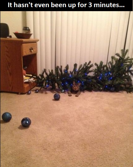 funny-picture-cat-new-year-tree